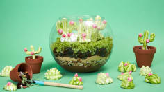 Brownie Terrarium